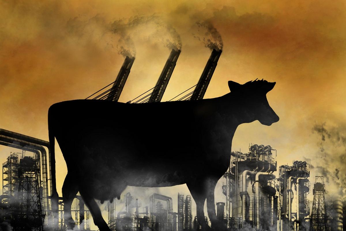 Resultado de imagem para cattle methane