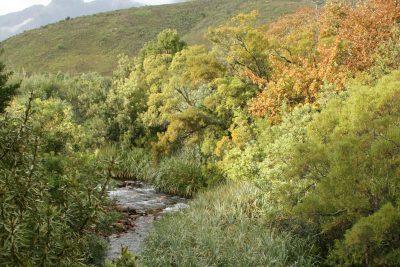 stellenbosch-2
