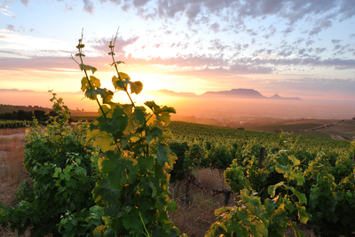 cape-winelands-courtesy-of-wwf-sa-photo-by-tielman-roos-jnr
