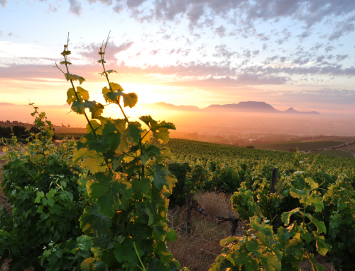 Supporting SA's top Green Wines