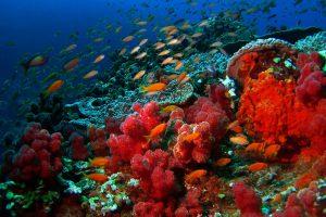 underwater-biodiversity