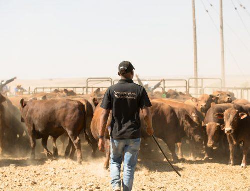 Khanyile's Unstoppable Afrikan Farms