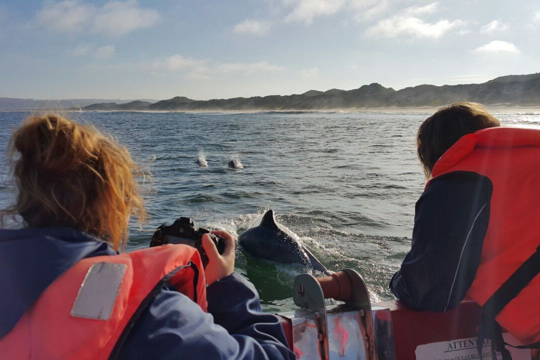 SA's first boat-based whale-watching study